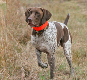 "Think of the service technician as your ""bird dog,"" the person who finds the prize by asking and pulling the trigger."